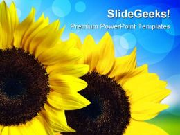 Sunflower Nature PowerPoint Templates And PowerPoint Backgrounds 0211