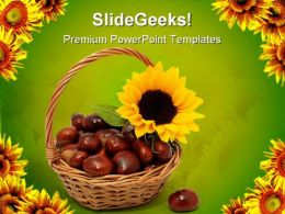 Sunflower With Chestnuts Nature PowerPoint Templates And PowerPoint Backgrounds 0311