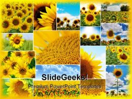Sunflowers Collage Beauty Abstract PowerPoint Templates And PowerPoint Backgrounds 0211
