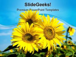 Sunflowers Family Nature PowerPoint Templates And PowerPoint Backgrounds 0211