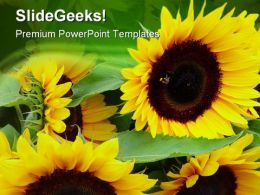 Sunflowers Nature PowerPoint Templates And PowerPoint Backgrounds 0311