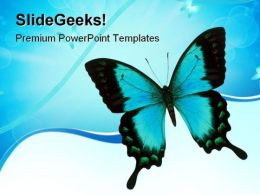 Swallowtail Butterfly Animals PowerPoint Templates And PowerPoint Backgrounds 0811
