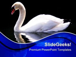 Swan Reflected Animals PowerPoint Templates And PowerPoint Backgrounds 0511