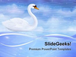 Swan Reflecting In Water Animals PowerPoint Templates And PowerPoint Backgrounds 0711