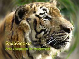 Tiger 0109