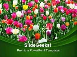 Tulip Field Beauty PowerPoint Templates And PowerPoint Backgrounds 0211