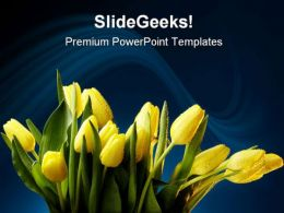 Tulips01 Beauty PowerPoint Templates And PowerPoint Backgrounds 0311