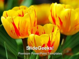 Tulips Beauty PowerPoint Templates And PowerPoint Backgrounds 0211