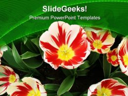 Tulips Flower Beauty PowerPoint Templates And PowerPoint Backgrounds 0411