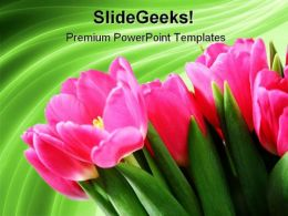 Tulips On Green Abstract Beauty PowerPoint Templates And PowerPoint Backgrounds 0311