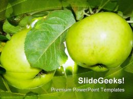 Two Apples In A Tree Nature PowerPoint Templates And PowerPoint Backgrounds 0211