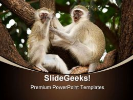 Vervet Monkeys Animals PowerPoint Templates And PowerPoint Backgrounds 0211