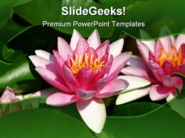 Water Lily Beauty PowerPoint Template 1110