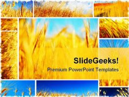 Wheat Field Collage Food PowerPoint Templates And PowerPoint Backgrounds 0611
