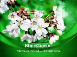 White Flowers On Branch Nature PowerPoint Templates And PowerPoint Backgrounds 0311