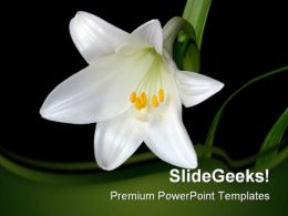 White Lily Beauty PowerPoint Template 0810