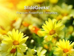 Yellow Daisies Beauty PowerPoint Templates And PowerPoint Backgrounds 0311
