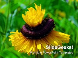 Yellow Flower01 Nature PowerPoint Templates And PowerPoint Backgrounds 0211