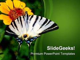 Yellow Flower And Butterfly Nature PowerPoint Templates And PowerPoint Backgrounds 0211