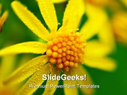 Yellow Flower Beauty PowerPoint Templates And PowerPoint Backgrounds 0211