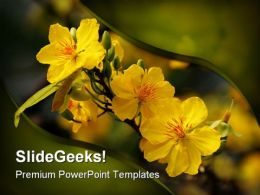 Yellow Flower Nature PowerPoint Templates And PowerPoint Backgrounds 0211