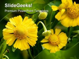 Yellow Flowers Beauty PowerPoint Templates And PowerPoint Backgrounds 0211