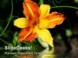 Yellow Orange Lily Nature PowerPoint Templates And PowerPoint Backgrounds 0311