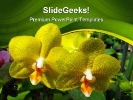 Yellow Orchids Beauty PowerPoint Templates And PowerPoint Backgrounds 0211