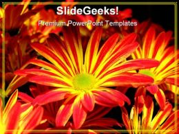 Yellow Red Daisy Flower Beauty PowerPoint Templates And PowerPoint Backgrounds 0311