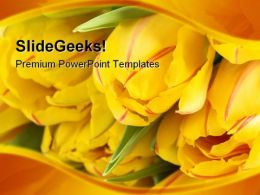Yellow Tulips Beauty PowerPoint Templates And PowerPoint Backgrounds 0211