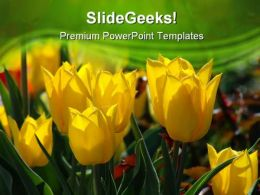 Yellow Tulips Beauty PowerPoint Templates And PowerPoint Backgrounds 0311