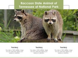 Raccoon State Animal Of Tennessee At National Park