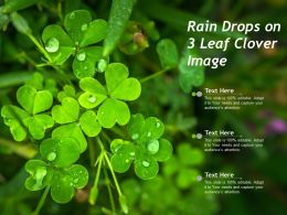 Rain Drops On 3 Leaf Clover Image
