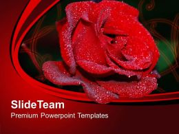 Red Rose Flower Beauty Powerpoint Templates Ppt Themes And Graphics 0313