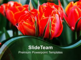 Red Tulips Flowers Beauty PowerPoint Templates PPT Themes And Graphics 0213