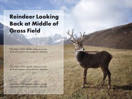 Reindeer Looking Back At Middle Of Grass Field