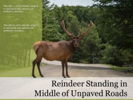 Reindeer Standing In Middle Of Unpaved Roads