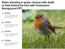 Robin Standing In Grass Closeup With Depth Of Field Behind The Bird With Ppt