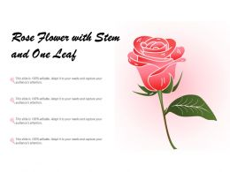 Rose Flower With Stem And One Leaf