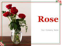 Rose Individual Representing Arrangement Circular Multiple