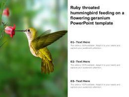 Ruby Throated Hummingbird Feeding On A Flowering Geranium Powerpoint Template