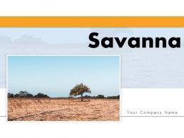 Savanna Landscape Sunrise Migration Tourist Wildebeest