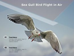 Sea Gull Bird Flight In Air