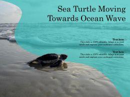 Sea Turtle Moving Towards Ocean Wave