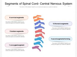 Segments Of Spinal Cord Central Nervous System