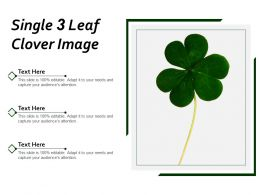 Single 3 Leaf Clover Image