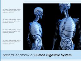 Skeletal Anatomy Of Human Digestive System