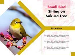 Small Bird Sitting On Sakura Tree