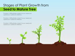 Stages Of Plant Growth From Seed To Mature Tree