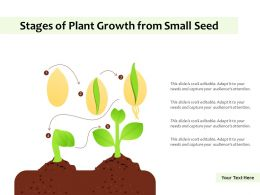 Stages Of Plant Growth From Small Seed